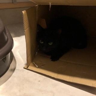 黒猫の里親募集