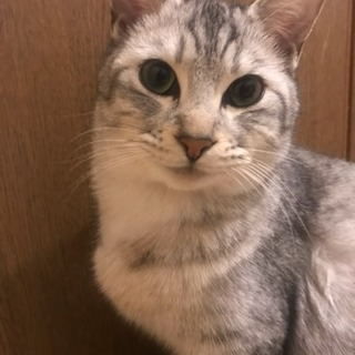 約9ヶ月の猫