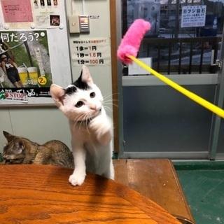 下水道に落ちてた子猫ちゃん - 猫