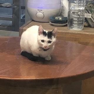 下水道に落ちてた子猫ちゃん − 沖縄県