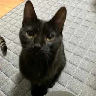 里親さん決定【黒猫6か月メス】