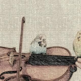 ♪大阪・奈良・京都de バイオリン♪