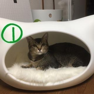 【里親様募集】福岡周辺 兄弟 猫 2匹 - 猫