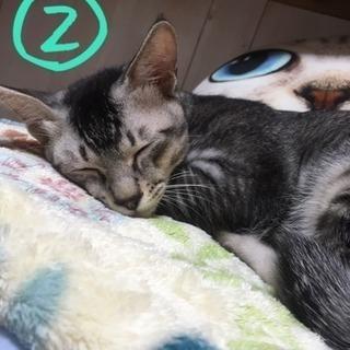 【里親様募集】福岡周辺 兄弟 猫 2匹 - 福岡市