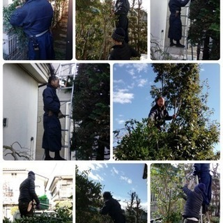 庭木の手入れ 除草 伐採なら 庭の手入れ店へ【所沢市 狭山…