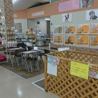 ✂︎トリマーさん募集✂︎廿日市陽光台店