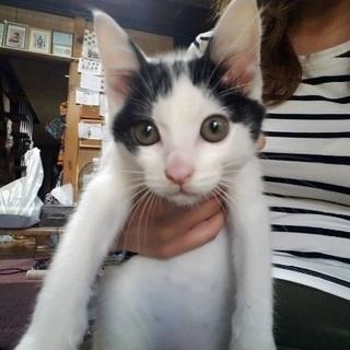 里親募集 子猫7ヶ月