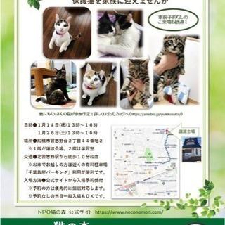 【保護猫】猫の森ふれあい譲渡会【里...
