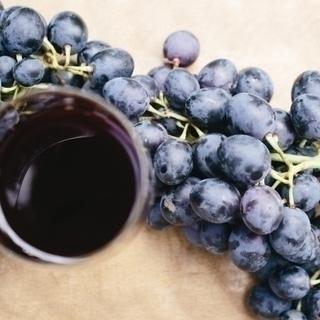 ワイン初心者向け!新春から始める「初めてワイン入門講座」