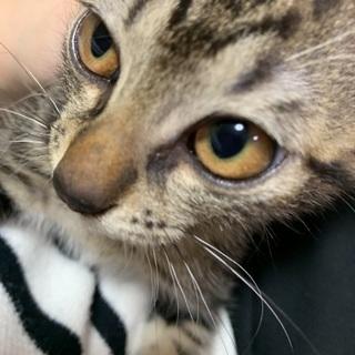 子猫の里親さん募集🌸 − 沖縄県