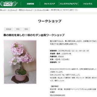 告知! 東急ハンズ新宿店で「桜のモ...