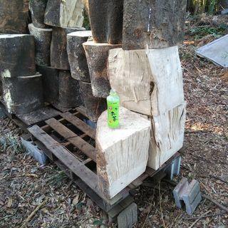 薪に!広葉樹エノキの玉切り丸太。【難物】アウトレット。長さ35cm...