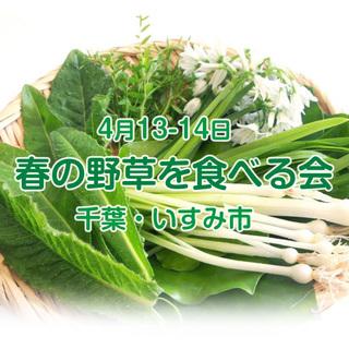 4/13-14 千葉・いすみ市「春野草を食べる親子会」(シングルマ...