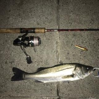 【晴海・豊洲】シーバス釣りの開拓仲間、釣り友を探してます❗️