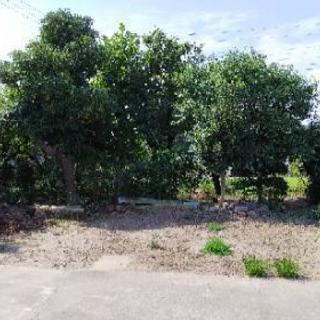 枝降ろし 樹木伐採 抜根 整地 この時期に