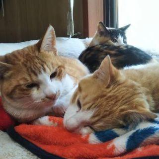 可愛い子猫の3兄妹の里親様を探しています
