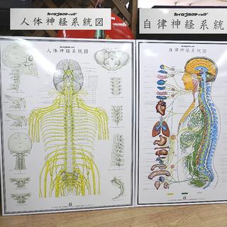 自律神経系統図 人体神経系統図 カイロプラクティック パネ…