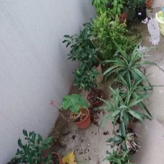 植木 色々1鉢50円