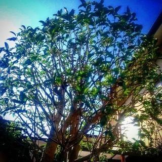 🌿庭木の剪定、除草🌿 - 福岡市