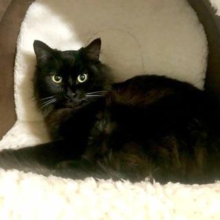 黒猫 長毛 おっとりな女の子