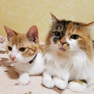 ☆2匹ペアで♪穏やか三毛&甘えん坊な茶白ちゃん