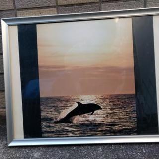 写真 イルカ夕陽 アルミフレーム