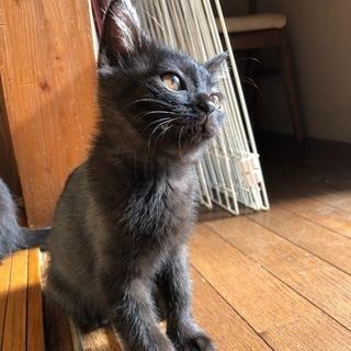 一時募集停止します。ジジ似な黒猫2兄妹ちびニャンズ。