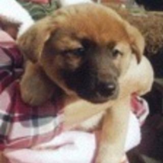 子犬1.5ヶ月の家族募集!