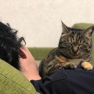 性格花まる!とっても飼いやすい若いメスの猫ちゃんです! - 福岡市