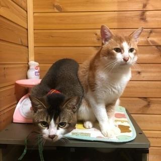 3匹のオス猫ちゃんの里親募集‼️