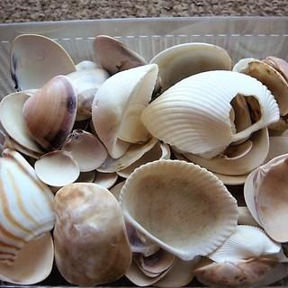値下げ!【お子様の工作やDIYなどに】穴あきや欠けのある貝殻たっぷ...