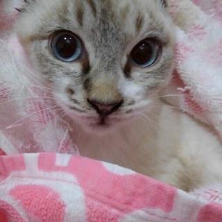 兄弟で良きご縁がありました!小柄な青い目の美男子!