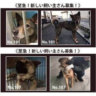 松山市保健所 至急 新しい飼い主さん募集