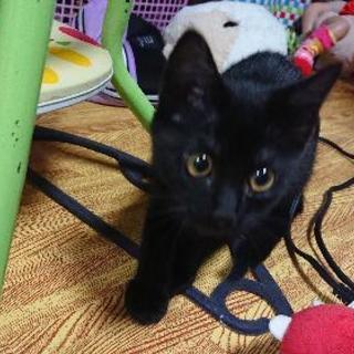 約4ヶ月の黒猫ちゃん。メスです。