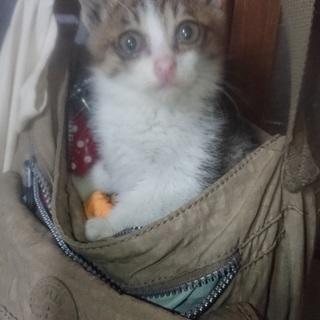 1ヶ月の愛らしい赤ちゃん猫!