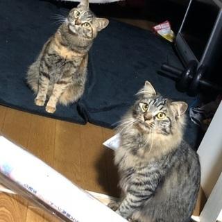 猫ちゃん達をよろしくお願います🙇💦