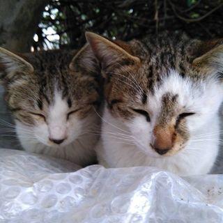 地域猫活動ボラさん募集 - ボランティア