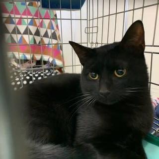 毛並みのきれいな黒猫ちゃん