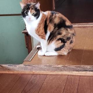 【交渉中】近所で保護をした野良猫の家族達です。多頭でも、1匹ずつで...