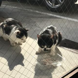野良猫ちゃんを飼って下さい