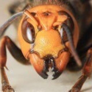 蜂の退治はお任せを‼️これからの時期に早めに手を打ちましょう!