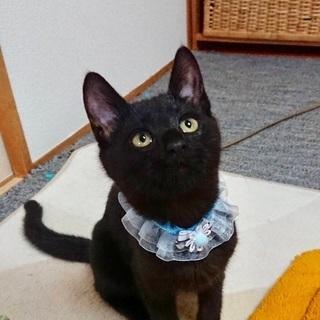 生後4ヶ月の黒猫君です3/3(日)譲渡会に参加予定