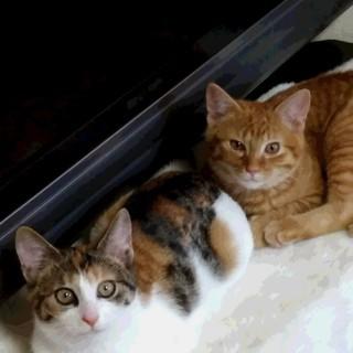 かわいい子猫さしあげます ^_^