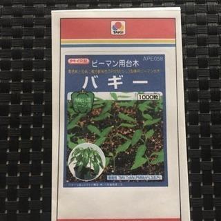 ピーマンの台木(バギー)種100粒×2袋
