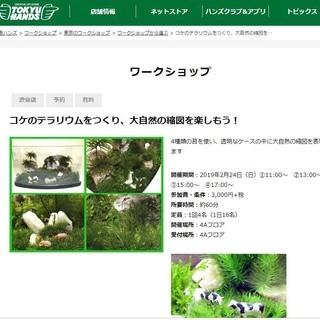 東急ハンズ渋谷店で「苔のテラリウムワークショップ」開催します。