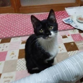 ※取引中(堅田付近の方優先募集)推定生後3ヶ月♀の猫ちゃんの里親募集