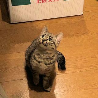 目のくりくりした 美形の子猫ちゃん達です。