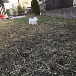 豊島区巣鴨 ペットホテル − 東京都