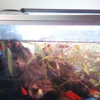 水槽 熱帯魚