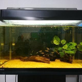 追記あり!熱帯魚
